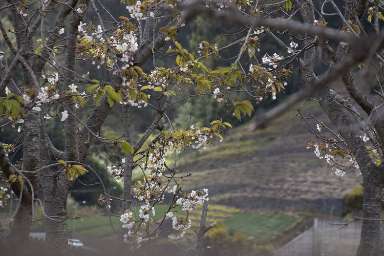 Flowering plants by trees