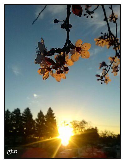 Eye Em Nature Lover Eyeem Sunset-sunrise