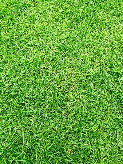 Green grass background. Green Grass Grass Grass Area Grass Photography Grass Field Grass Background Grass For Ground Relaxing Relaxing Time Nature Photography Naturephotography Nature_collection