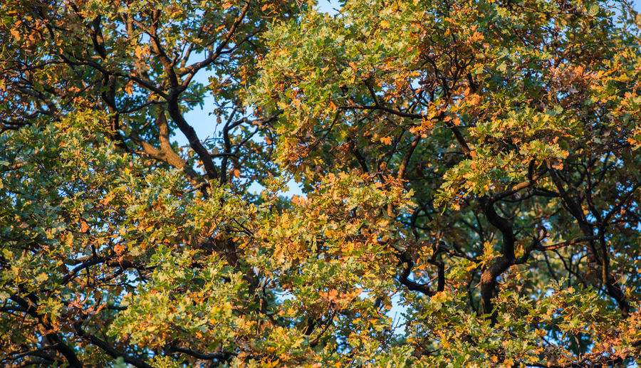 Autumn trees and fallen leaves. Tree Plant Autumn Beauty In Nature Branch Nature Growth Change No People Tranquility Day Low Angle View Plant Part Outdoors Leaf Backgrounds Yellow Orange Color Sky Full Frame Tree Canopy