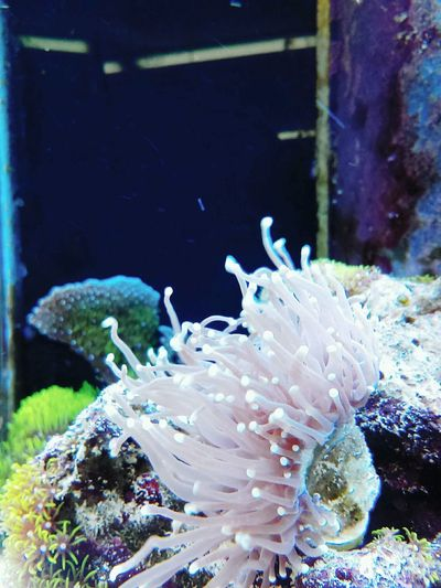Coral Reef Fish Anenome Water Relax