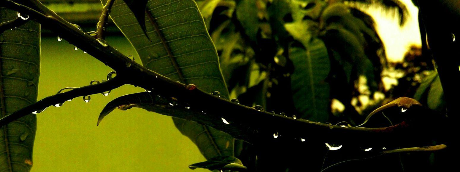 Waterdrops Droplets