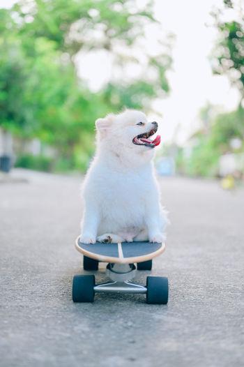 Small dog sitting on a car