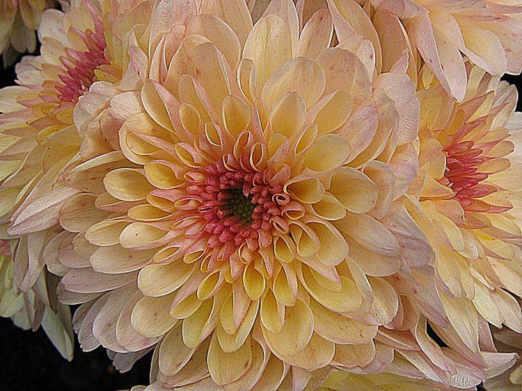 Floralperfection Flowerforfriends Beauty Flowers