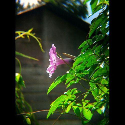 Selamat siang iger ============================================= Instagram Forandroid Flower Instgallery_indonesia instanusantara ilovemeulaboh webstagram whisky_droid