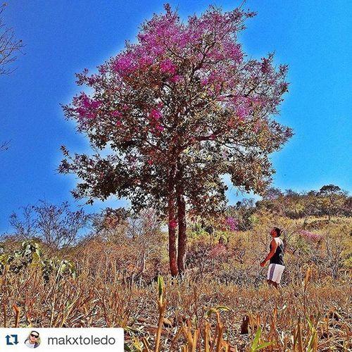 Diamantino-MT Foto: @makxtoledo ___________________________________ Diamantino MatoGrosso_Brasil Matogrosso CentroOeste Brasilien Bresil  Brasil Brazil Southamerica World IloveBrazil VisitBrazil VejaMatoGrosso MtcomVc DestinosTuristicosMT Magnifique Paisagens BrasilSensacional Photo BrasilSensacional BrasilCentral Arvore