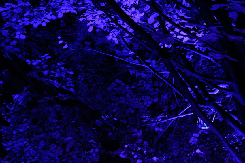 Blue Color Dark Darkness And Light EyeEm Gallery EyeEm Illuminated EyeEm Nature Lover Full Frame Illuminated Learn & Shoot: After Dark Lichtspiele Light Night Nightphotography Non Urban Scene Outdoors Poesie Des Lichts Schloss Dyck Tranquil Scene Tree TreePorn Vibrant Color