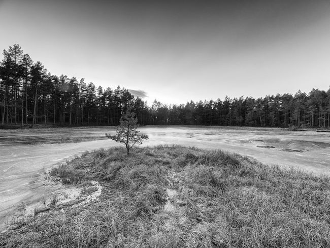 The frosen lake Måsatjernet at Nesodden, Norway Black & White Blackandwhite Forest Forrest Lake Frosen Lake Frost Frosty Days Frozen Lake View Lakeshore Nature Nature No People Norway Outdoors Scandinavia Small Tree Small Tree On The Beach Tree Wood Shades Of Winter