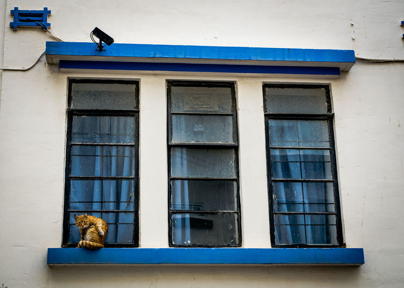 Animal Themes Architecture Blue Building Exterior Built Structure Day Low Angle View No People Outdoors Window