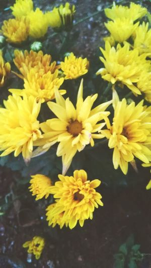 Goodmorning Yellow Photo♡ Nature Flawer🌸 Beauty Nature_collection My Collection...