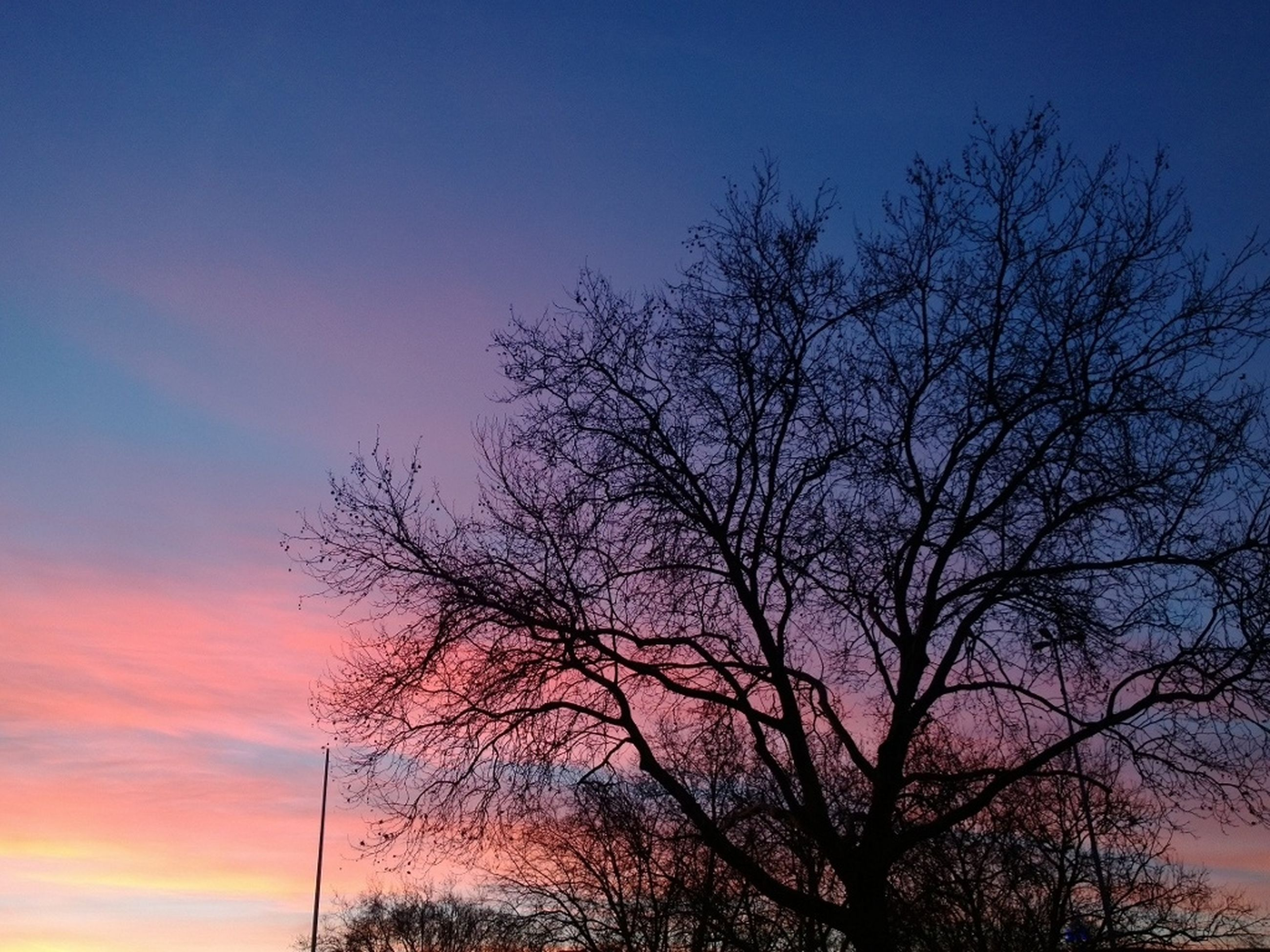 bare tree, silhouette, tree, low angle view, sunset, tranquility, branch, sky, beauty in nature, scenics, tranquil scene, nature, blue, dusk, orange color, idyllic, outdoors, no people, cloud - sky, clear sky