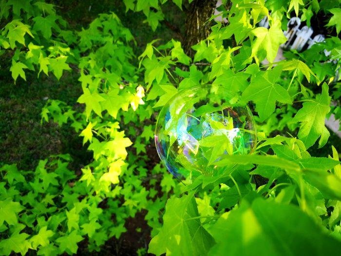 Nature Green Bubble Soap Bubbles Bubbles Childhood Springtime Water Leaf Backgrounds Close-up Green Color Plant