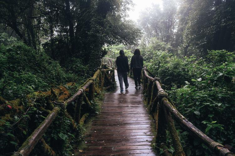 Rear view of female friends walking on boardwalk in forest