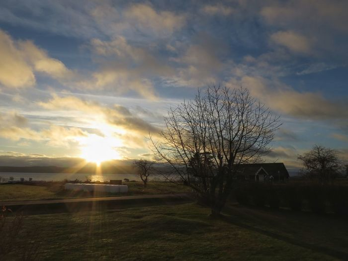 1st Advent Landscape In My Garden Tree December Morning Outdoors Cloud And Sky
