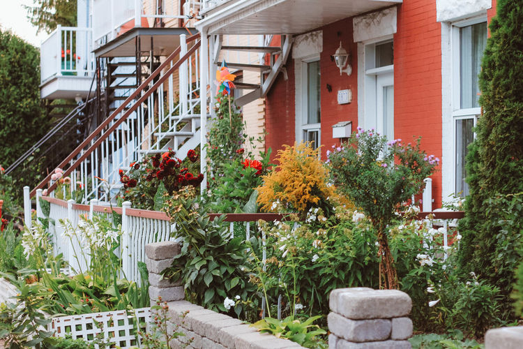 Animals In The Wild Architecture City Cityscape Exterior Plants Tree Animal Wildlife Animals Architecture Building Exterior Built Structure Canada Day Flower Flowers Growth House Landscape No People Outdoors Plant Railing Residential Building Staircase Steps And Staircases Wildlife