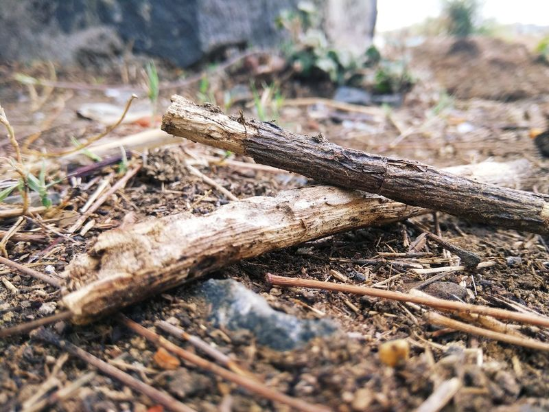 Land Plant Day Nature No People Forest Field Selective Focus Close-up Log Focus On Foreground Wood - Material Falling Ground Sunlight Timber Wood Outdoors Tree Dry