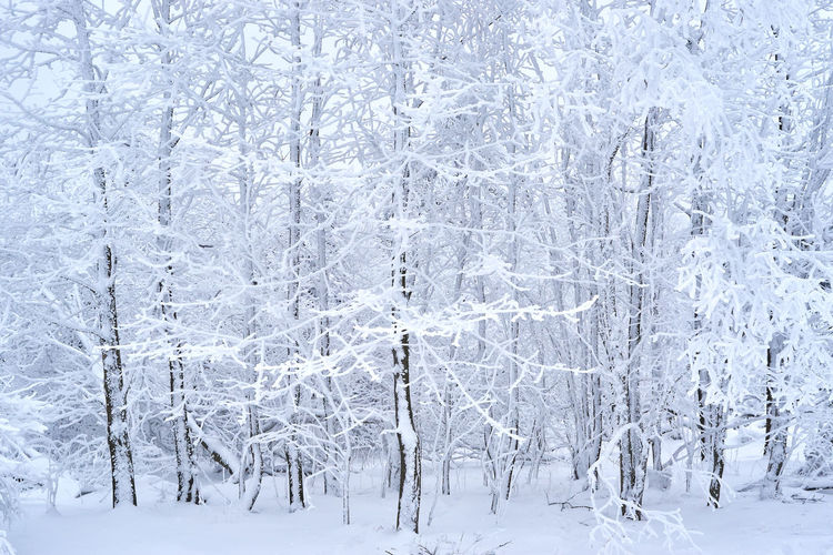 Beauty Beauty In Nature Branch Cold Temperature Day Forest Frozen Ice Landscape Nature No People Outdoors Polar Climate Scenics Silence Slippery Snow Snowflake Snowing Spruce Tree Tranquil Scene Tranquility Tree White Color Winter