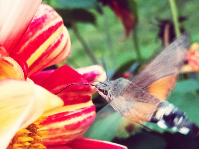 Summer Flower BYOPaper!