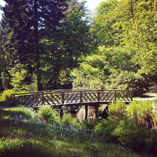 Bridge @ Oranjewoud Nature Fryslan Heerenveen Netherlands