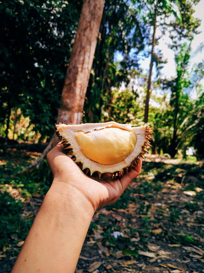 Close-up of woman hand holding durian outdoors