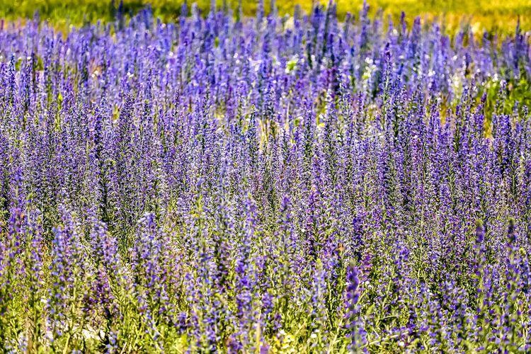 Full frame shot of flowering plants growing on field