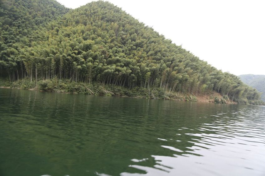 The Purist (no Edit, No Filter) Anhui,China Hometown Lake Lake View Watercolor Water Reflections Boat Ride Bamboo Forest Check This Out