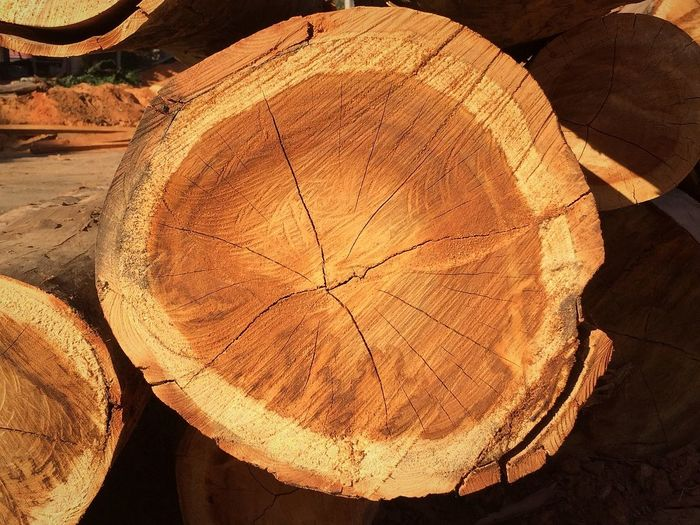 Wood Wood Working Kernel Nature Preservation Cut Tree