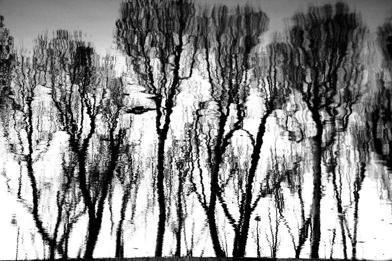 Reflection Trees Beauty In Nature Bnw Bnw_collection Close-up Day Nature No People Outdoors Reflection_collection Reflections Reflections In The Water Scenics Sky Tranquility Tree The Creative - 2018 EyeEm Awards