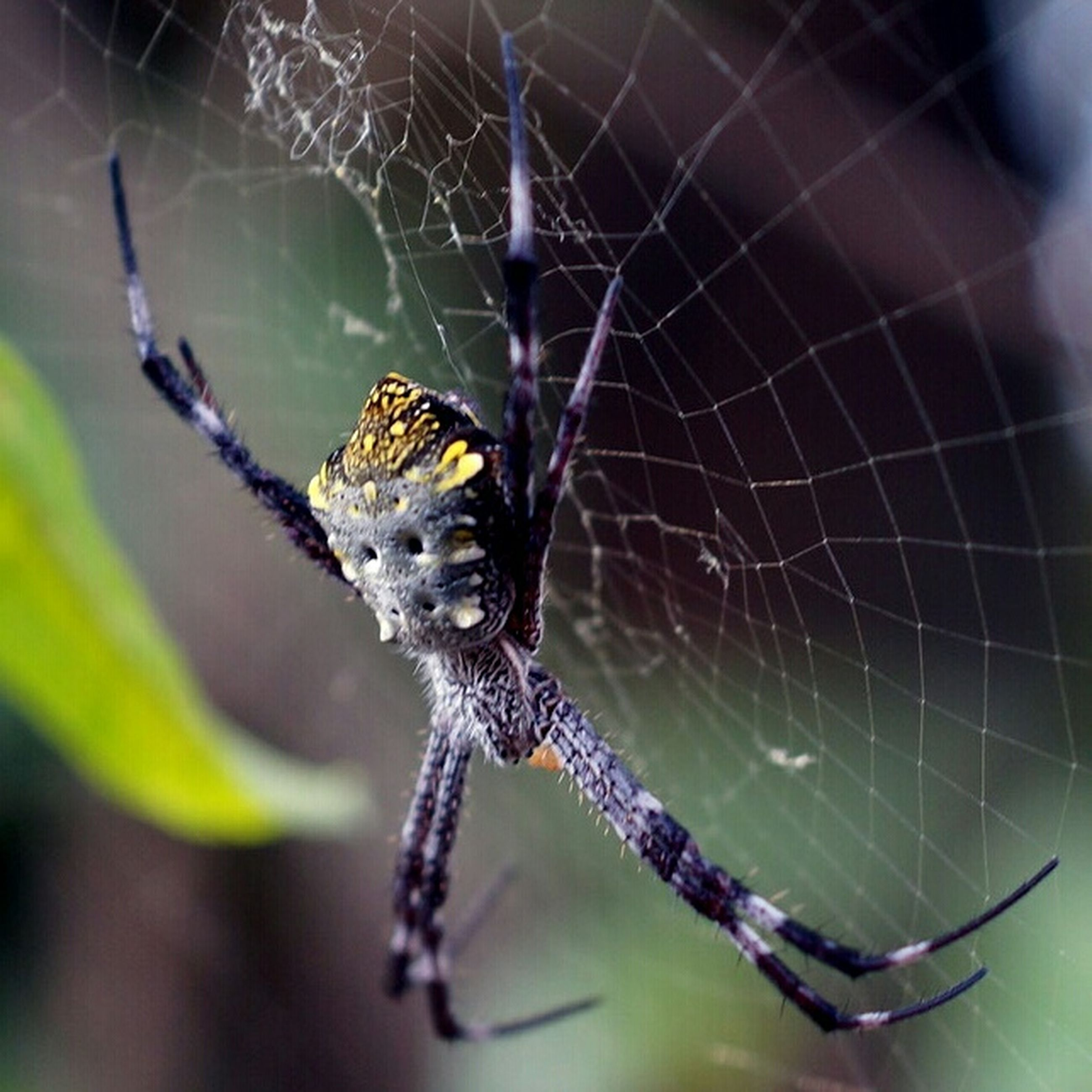 animal themes, one animal, animals in the wild, wildlife, spider web, spider, close-up, focus on foreground, insect, selective focus, nature, outdoors, zoology, animal body part, day, natural pattern, no people, danger, arachnid