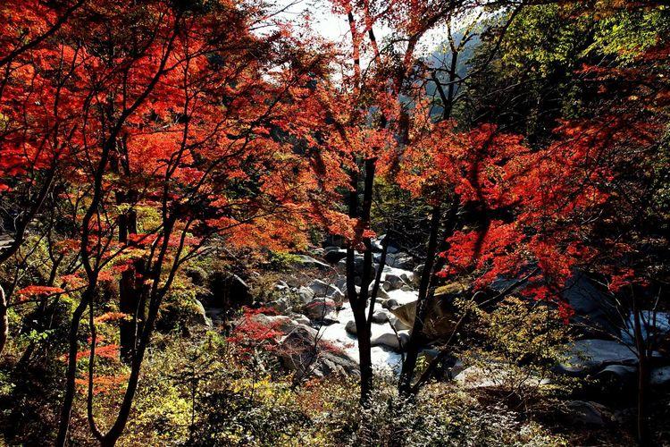 山梨県 甲府市 昇仙峡 紅葉 Japan Yamanashi Kōfu-shi Nature Mountain Forest Autumn Autumn Leaves