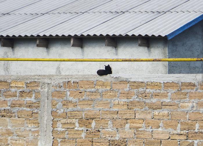 Bird perching on wall of building