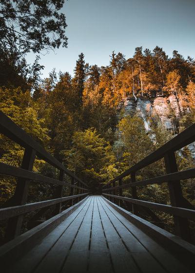 Footbridge amidst trees during autumn