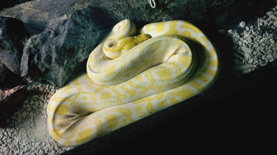Animals Naturaviva Pastrengo Zoo Snake Happyday