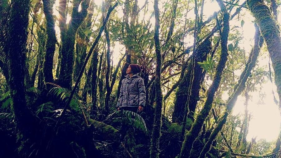 Plant Tree Growth Day Nature Forest Beauty In Nature Tranquility Outdoors Land Low Angle View Real People Tree Trunk Trunk Leisure Activity Lifestyles Sunlight Ilovetrekking Nature Philippinemountains Woman Traveler Women Adventure Woman Trekker Beauty In Nature