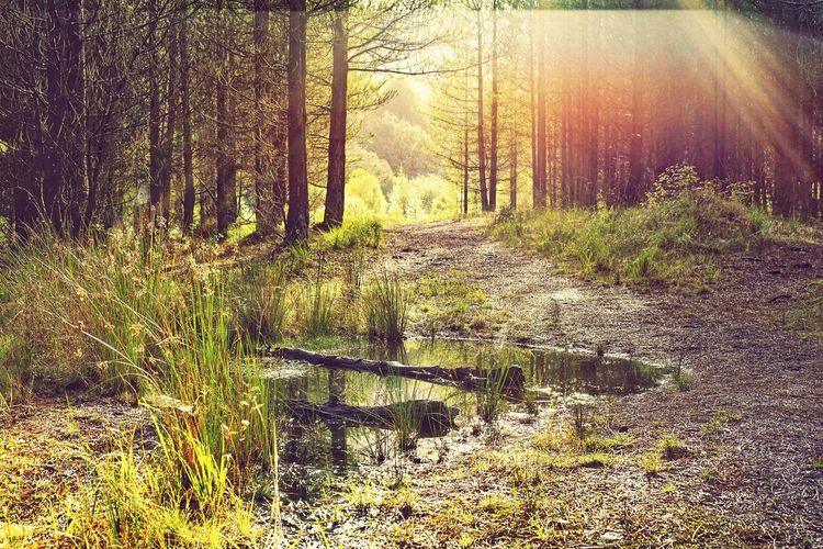 Tree Nature Beauty In Nature Growth Outdoors Day Forest No People Tranquility Sunlight Scenics Grass Sky