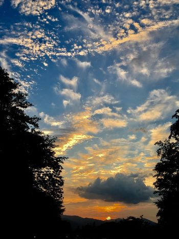 Subject : A Beautiful Sunset Seen from the Inside of the Car on the Way Back to Kure. Tree Sunset Beauty In Nature Silhouette Sky Nature Scenics Tranquility Cloud - Sky No People Tranquil Scene Low Angle View Outdoors Growth Yellow Day . Taken in Higashi-Hiroshima , Japan on Sep. 29, 2017 ( Submitted on Oct. 8, 2017 )