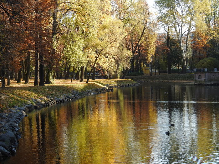 Reflection Water Tree No People Nature Lake Day Beauty In Nature Garden Lopuhinoi Sunny Day 🌞 Colors Of Autumn October Freshness EyeEmNewHere Fifty Shades Of Yellow Autumn🍁🍁🍁 Tree Autumn Cityscape Colors Of Sankt-Peterburg Sankt-Petersburg Russia