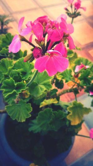 Las consentidas Flowers Garden