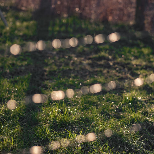 Beauty In Nature Defocused Grass Illuminated Nature No People Outdoors Raindrops On A Fence
