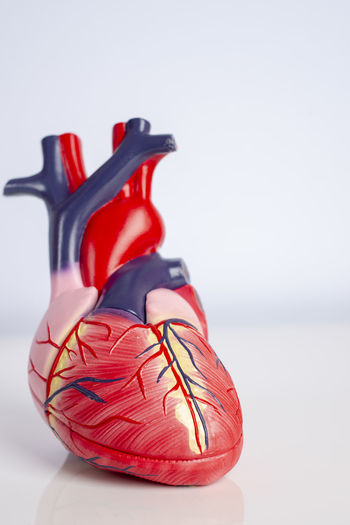 Close-up of heart model against white background