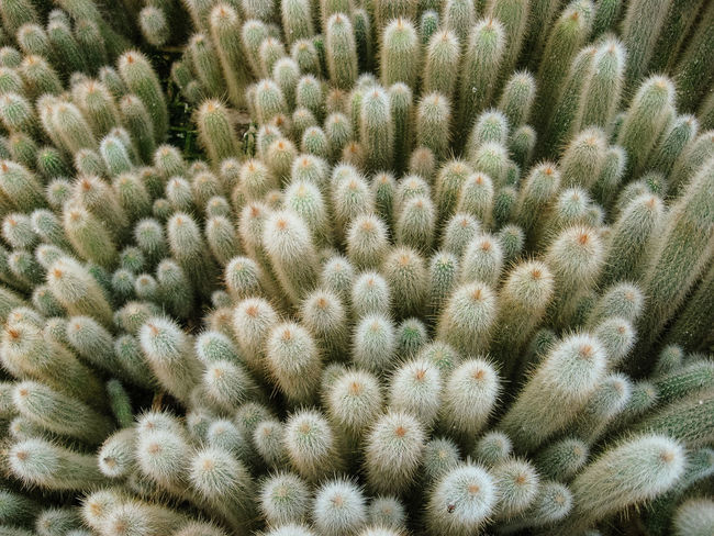 Cactus Collection from above Cactus Cactus Garden Cactus Flower Macro Photography Cactus Collection Cactus Family Plant Close-up Different Perspective Green Cactus Green Plant Macro Small Cactus View From Above
