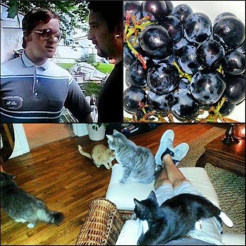 162/365 Trailerparkboys Bubbles Blackgrapes Kittycousins