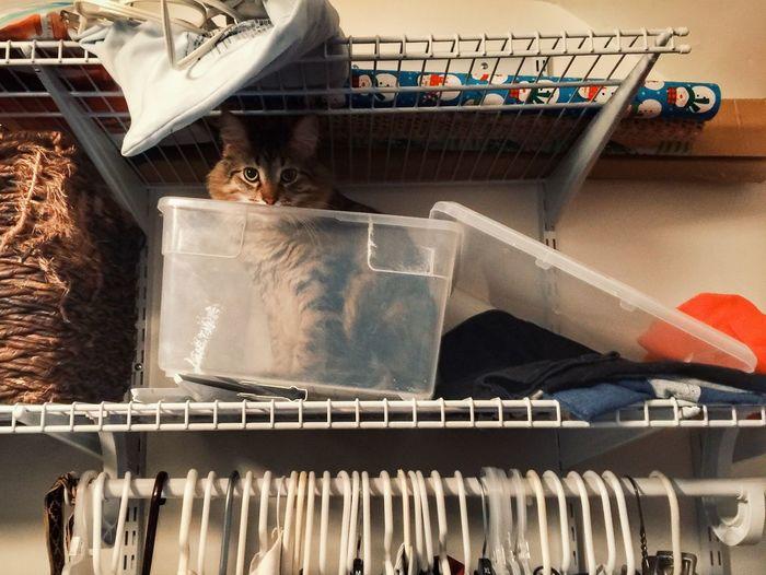 Cat in container