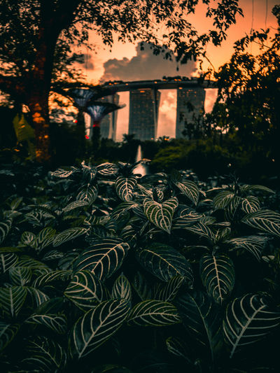 Marina Bay Sands EyeEmNewHere Landscape Gardens By The Bay ASIA Singapore Nature Travel Destinations Travel Marina Bay Sands Tree Plant Nature Architecture Celebration Outdoors Built Structure Holiday Beauty In Nature No People The Traveler - 2018 EyeEm Awards The Architect - 2018 EyeEm Awards EyeEmNewHere
