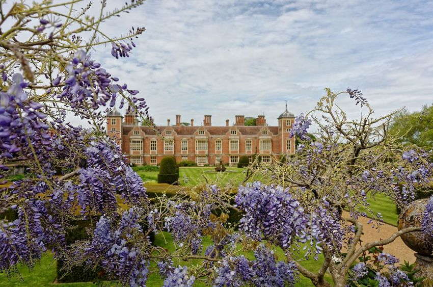 The elegance of Blickling, framed by the fragrant beauty of Wisteria. Nikon coolpix A, edit in Lightroom and DXO pro 10. BlicklingHall Historical Building Norfolk Uk Enjoying The View Gardens Landscape_photography
