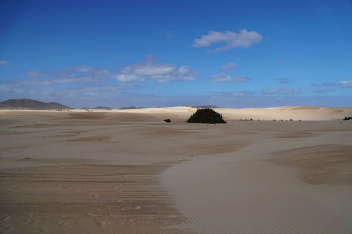 c3 Arid Climate Beach Beauty In Nature Blue Corralejo Corralejo, Fuerteventura Day Desert Landscape Nature No People Outdoors Remote Sand Sand Dune Scenics Sky Tranquil Scene Tranquility