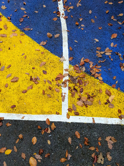 High angle view of yellow autumn leaves on road