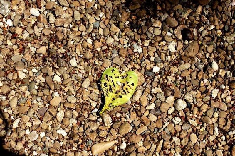 High angle view of butterfly on pebbles