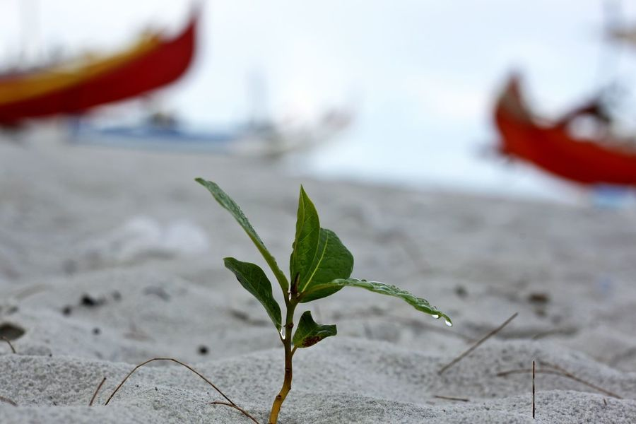 Beach Close-up Day Focus On Foreground Freshness Growing Tree Leaf Nature No People Outdoors Plant Resilience  Sand Sea Small Tree On The Beach Water