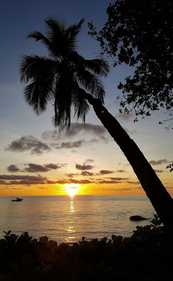 Sonnenuntergang auf den Seychellen im Norden von Mahe Beach Beauty In Nature Mahé Nature No People Outdoors Palm Tree Scenics Sea Seychellen Silhouette Sky Sun Sunset Tranquil Scene Tranquility Tree Water